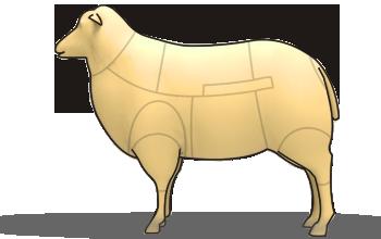 Styckningsschema för lamm